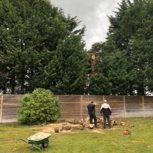 tree-care-1-300x300xc