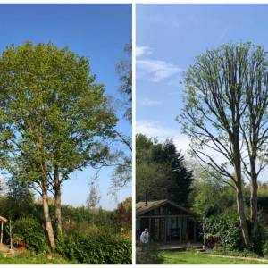 tree-care-15-300x300xc