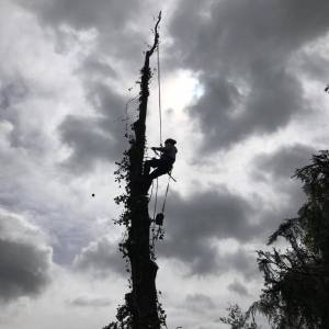 tree-care-18-300x300xc