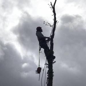 tree-care-19-300x300xc