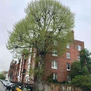 tree-care-2-300x300xc