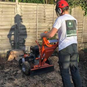 tree-care-21-300x300xc