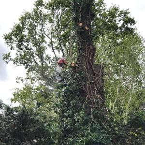 tree-care-23-300x300xc