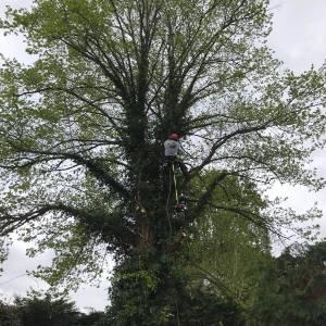 tree-care-24-300x300xc