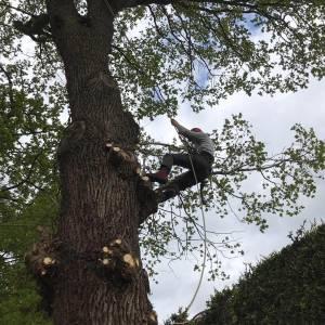 tree-care-26-300x300xc