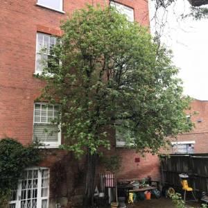 tree-care-3-300x300xc