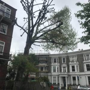 tree-care-4-300x300xc