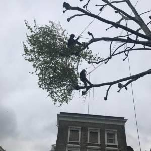 tree-care-5-300x300xc