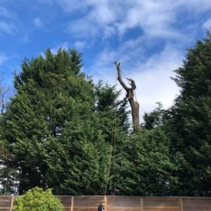 tree-care-6-300x300xc