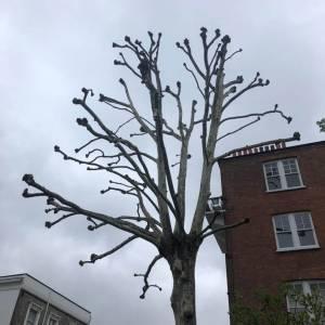 tree-care-7-300x300xc